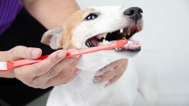 dog dental hygiene tips from animal medical center of richardson in texas